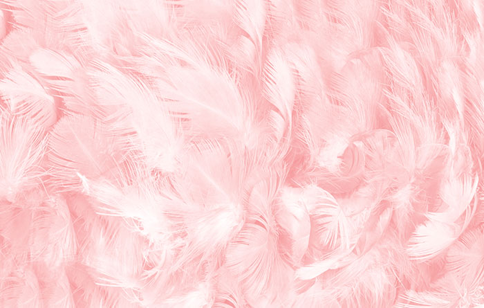 pinkfeather